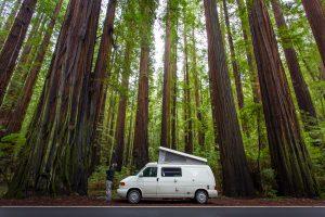 campervan redwoods